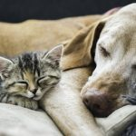 Mold and its effect on Pets