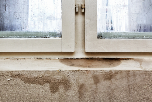 Preventing Mold this Winter