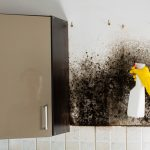 How to Get Rid of Black Mold – The Do's and Dont's