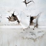 Tips For Preventing and Addressing Water Damage