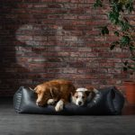 How to Treat Mold Exposure in Dogs?