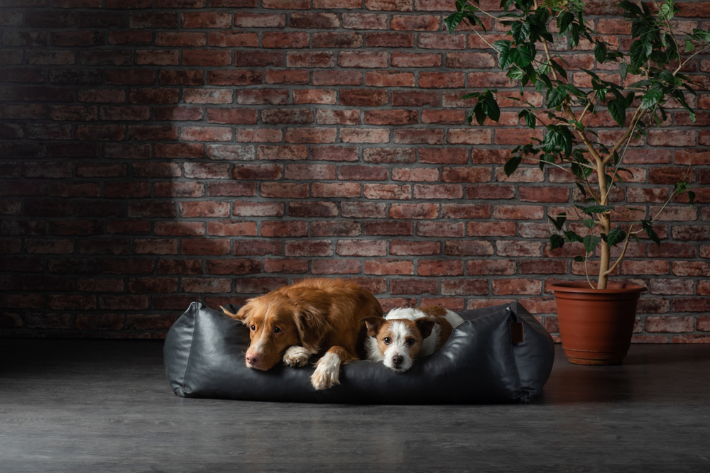 dogs laying on pillow