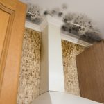How Can Mold Damage Your Home?